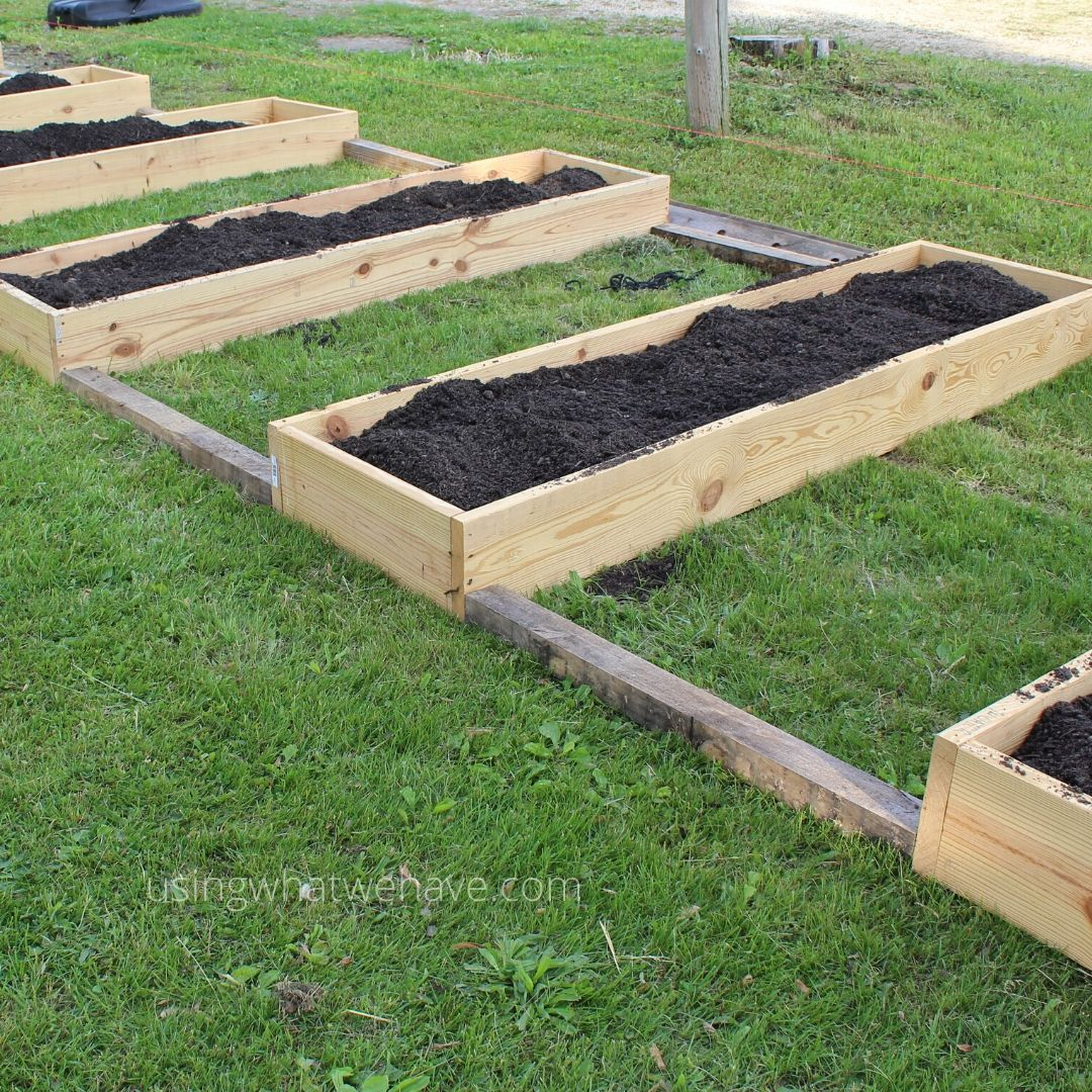 a line of raised garden beds